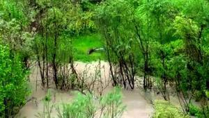 Zap Suyu'nda ilk defa su samuru görüntülendi