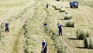 Çiftçiler borcunu hasatta ödüyor