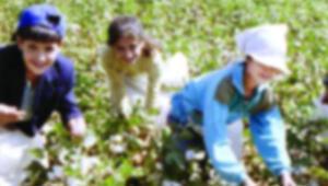TOÇEV: Çocuk işçi sayısı 2 milyon