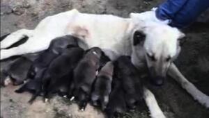 170 kilometre gidip, yavru köpekler ile annesini kurtardılar