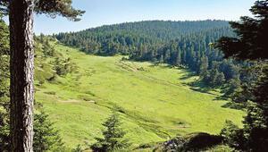 Ormanda turizm alanı