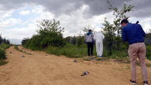 Boş arazide ölü çinçillalar bulundu