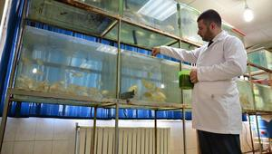 Balıkların büyümesinde seslerin etkisini araştırdı