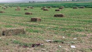 Afyonkarahisarda arazi anlaşmazlığı kanlı bitti: 2 ölü
