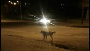 Köpeklerin saldırısına uğrayan 3 çocuk yaralandı