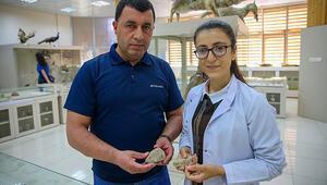 Üniversite öğrencisi piknik yaparken 50 milyon yıllık fosil buldu