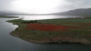 Göldeki ada kırmızıya büründü