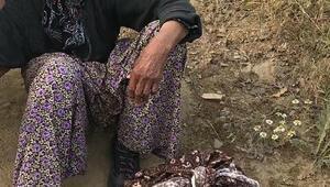 Kayıp alzheimer hastası kadın, 20 saat sonra ormanda bulundu