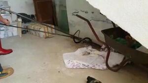 Depoya giren yılanı itfaiye yakaladı