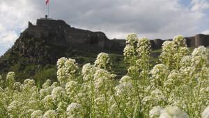 Baharın gelmesiyle Doğu illeri çiçek açtı