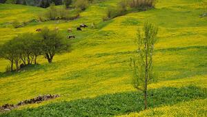 Zilkale'den Çat Vadisi'ne bahar yolculuğu