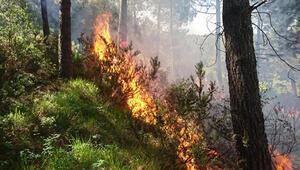 Pendikteki Aydos Orman'ında yangın