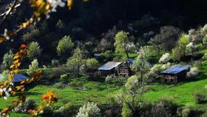 Bayram tatilinde doğaseverlerin rotası: Doğu Karadeniz