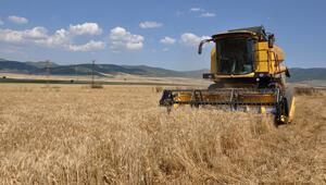 Gaziantepte buğday hasadına başlandı