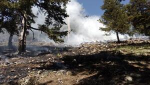 Adanada 6 dekar orman kül oldu
