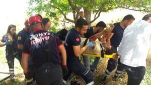 Küçükbaş taşıyan kamyonet şarampole yuvarlandı: 2 yaralı