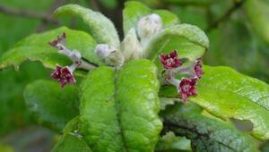 Dünyada son 250 yılda 600e yakın bitki türünün nesli tükendi