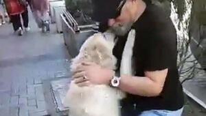 Kayıp köpekleriyle kavuşma anı sosyal medyada milyonlarca kez izlendi