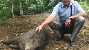 Tellere takılarak yaralanan domuz tedavi edildi