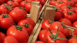 Rusyaya domates ihracatındaki artış yüz güldürüyor