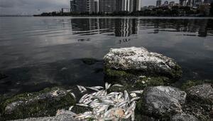 Küçükçekmece Gölünde tedirgin eden balık ölümleri