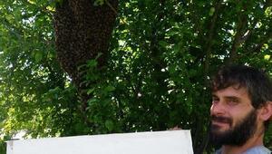 Kovandan çıkan binlerce arı ağaçta toplandı