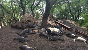Ağıla yıldırım düştü, 24 keçi öldü