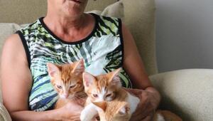 Belediyenin hayvan barınağına götürülen kedinin boynunun kırıldığı iddiası