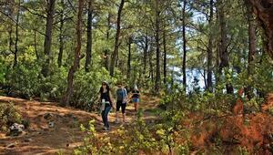 Türkiye, ağaçlandırmada dünya üçüncüsü
