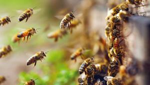 Arıların hayatını kurtarıyor