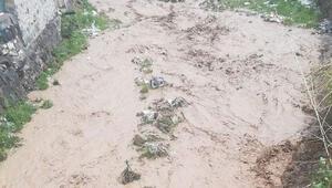 Anne ve iki çocuğu sel sularına kapılarak hayatını kaybetti