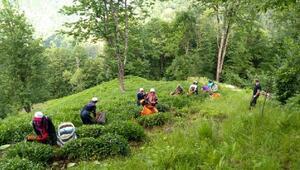 Çaya Geliyoruz projesi ile şehit annesinin çay hasadını yaptılar