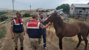 At hırsızı jandarma tarafından yakalandı