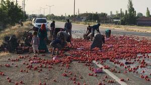Yola saçılan domatesleri toplayıp, evlerine götürdüler
