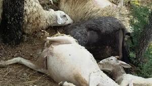 Denizlide yıldırım düştü; 15 koyun telef oldu
