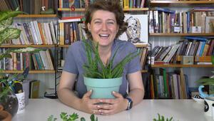 Aloe Vera bitkisi nasıl çoğaltılır