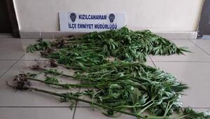 Polisin şüphesi, uyuşturucu bahçesini ortaya çıkardı