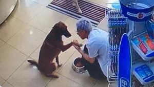 Patisinden yaralanan akıllı köpek eczacıdan böyle yardım istedi