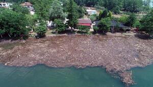 Selin sürüklediği ağaç parçaları ve çöp, Sapanca Gölünü kapladı