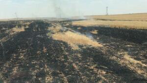 Nusaybinde 50 dönüm buğday ekili alan yandı