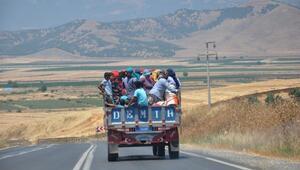 Tarım işçilerinin tehlikeli yolculuğu