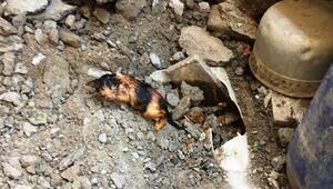Kanalizasyon borusuna sıkışan yavru kediyi itfaiye ekipleri kurtardı