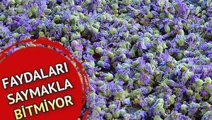Hatmi çiçeği nedir Hatmi çiçeğinin faydaları neler