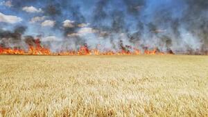 Aksarayda 300 dönüm tarım arazisi yandı
