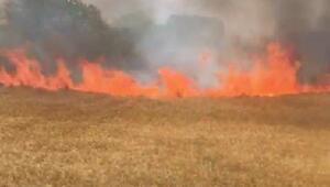Silivride 6 dönümlük buğday tarlası yandı