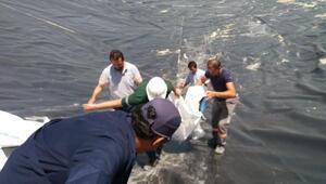 Atık barajında mahsur kalan köpeği Zabıta kurtardı