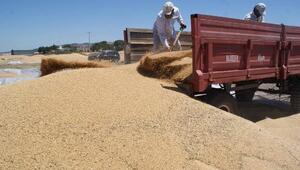 Üreticilerin yüzü buğday hasadıyla gülüyor