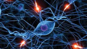 Beyin kanserinde bariyer koklayarak alınan ilaçla aşılacak
