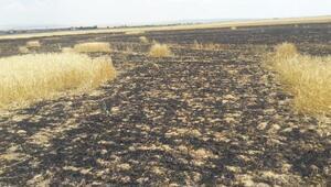 Kuluda 20 hektarlık ekili arazı yandı