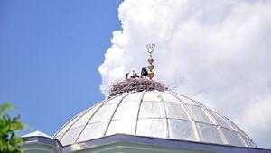 Cami kubbesindeki leylekler elektrik akımına kapıldı
